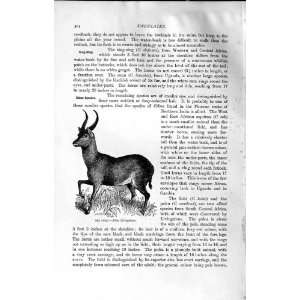 NATURAL HISTORY 1894 PUKU AFRICA VARDONI WILD ANIMAL