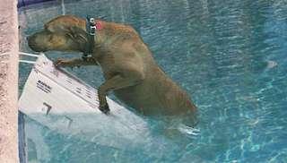 Pool Skamper Ramp SKR3   Large Pets Dogs Cats Safety