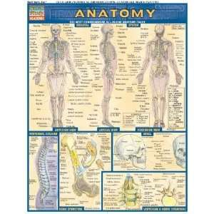 Chart: The Most Comprehensive All In One Anatomy Chart [CHART