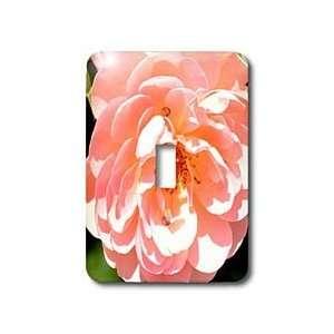 Patricia Sanders Flowers   Abundance Light Pink Rose Flower Macro