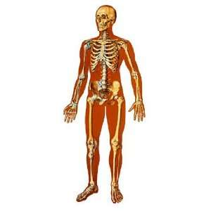 The Human Skeleton Giant Poster:  Industrial & Scientific