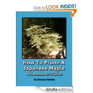 How To Prune A Japanese Maple   A Homeowners Guide: Dwayne Haskell