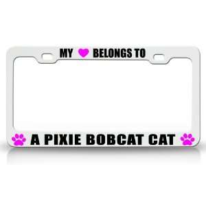 MY HEART BELONGS TO A PIXIE BOBCAT Cat Pet Auto License Plate Frame