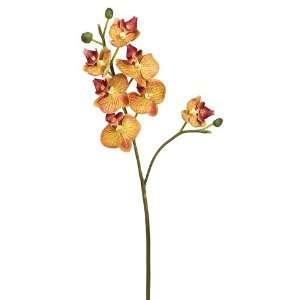 28 Mini Phalaenopsis Orchid Spray Green Burgundy (Pack of