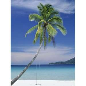 Palm Tree and Beach, Long Beach, Perhentian Kecil
